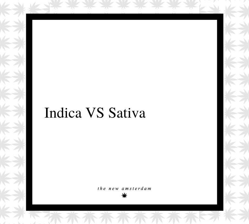1 - Indica vs Sativa - The New Amsterdam
