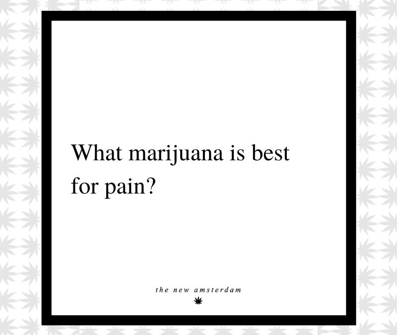 12 - What marijuana is best for pain - The New Amsterdam