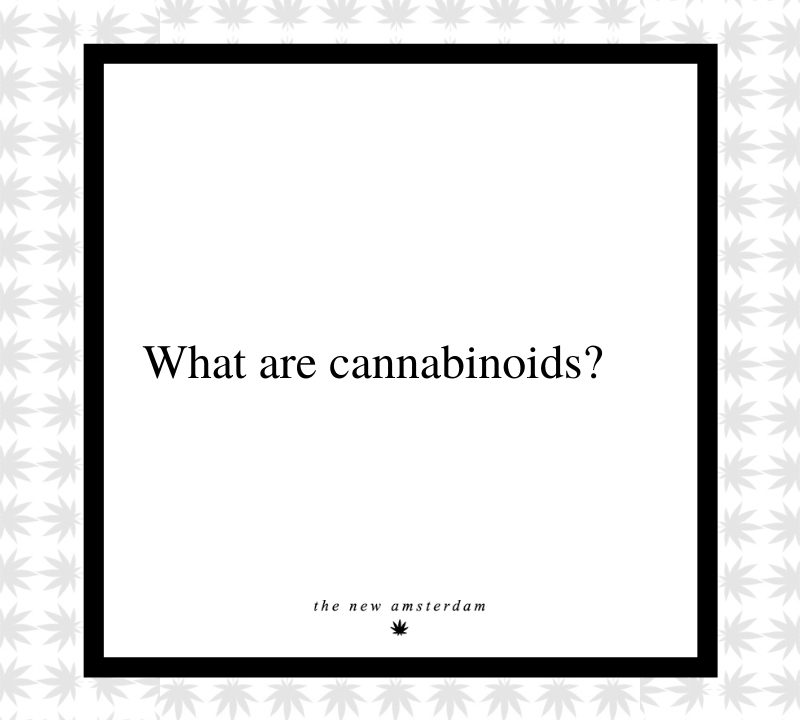 13 - Waht are cannabinoids - The New Amsterdam
