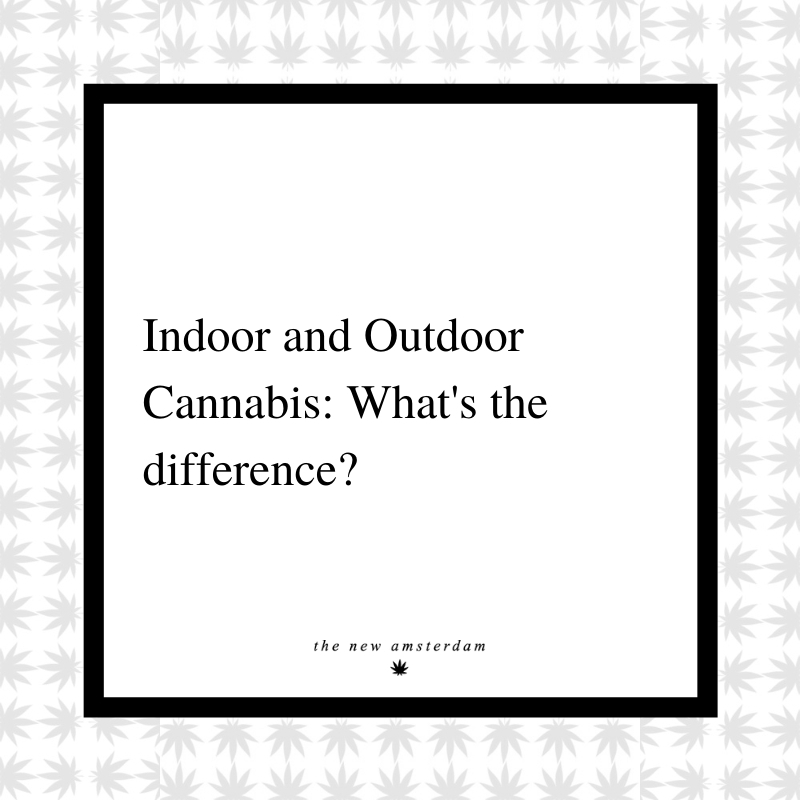 16 - Indoor and Outdoor Cannabis - What's the differance - The New Amsterdam