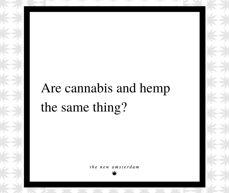 17 - Are cannabis and hemp the same thing - The New Amsterdam