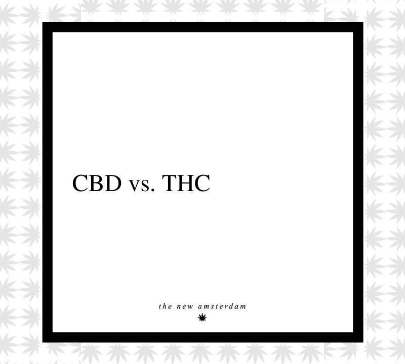 2 - CBD vs THC - The New Amsterdam