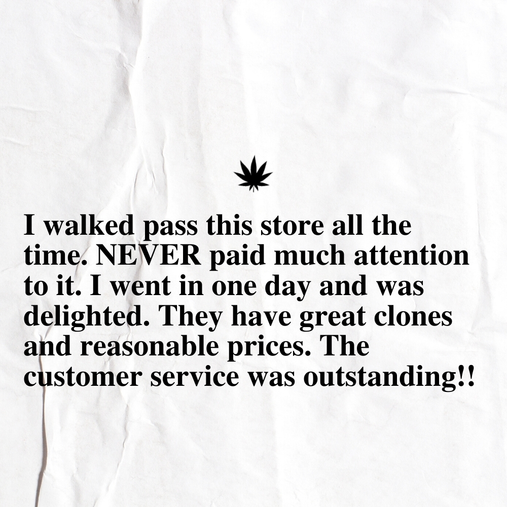 The New Amsterdam Customer Review 36