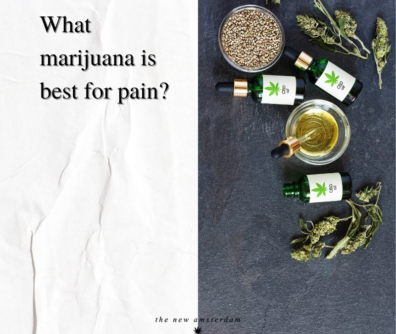 What marijuana is best for pain - The New Amsterdam