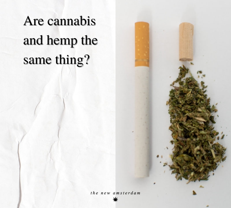 Are cannabis and hemp the same thing - The New Amsterdam