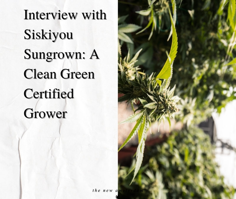 Interview with Siskiyou Sungrown - A clean green certified grower - The New Amsterdam